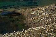 Paramos Lake, Ecuador --- Image by © Jeremy Horner/CORBIS