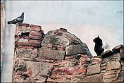 Spanje, Barcelona,10-1-2004Witte en zwarte poes zien in een duif een lekker hapje.Dieren, instinct, jagen, jacht, geduld, dierlijk gedrag, poezen, vogel, voedsel. De duif ontsnapte.Associatie durfinvesteerders,hedgefundsFoto: Flip Franssen/Hollandse Hoogte