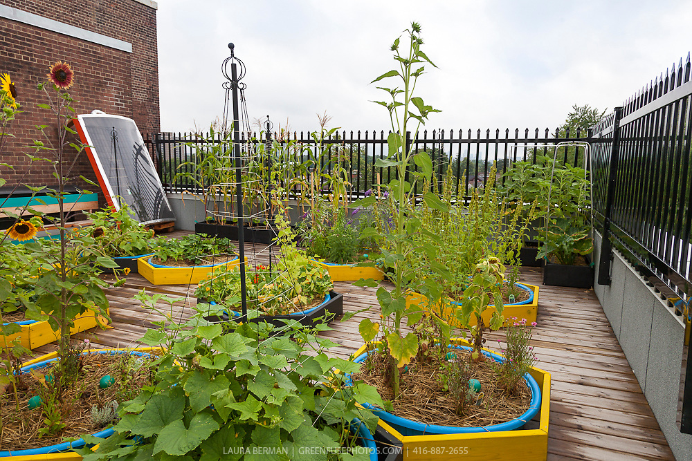 Wading pools as rooftop container gardens.