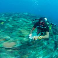 Scuba diver drift diving through ripping current, Komodo Island, Indonesia.