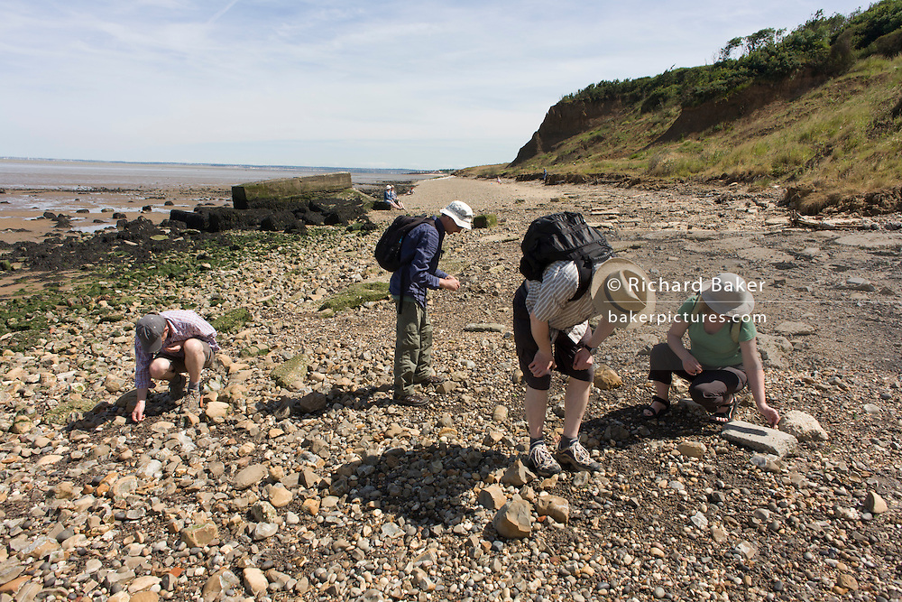 Fossil hunters bend down looking among Eocene rocks and stone at Warden Point, Isle of Sheppey, Kent, England