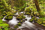 Ruckel Creek - Columbia River Gorge National Scenic Area