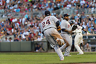 Miguel Cabrera #24 of the Detroit Tigers fields a soft ground ball during a game against the Minnesota Twins on June 15, 2013 at Target Field in Minneapolis, Minnesota.  The Twins defeated the Tigers 6 to 3.  Photo: Ben Krause