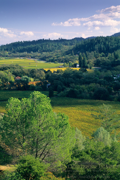 Overlooking the Napa Valley from Sterling Vineyards, Calistoga, Napa County, California
