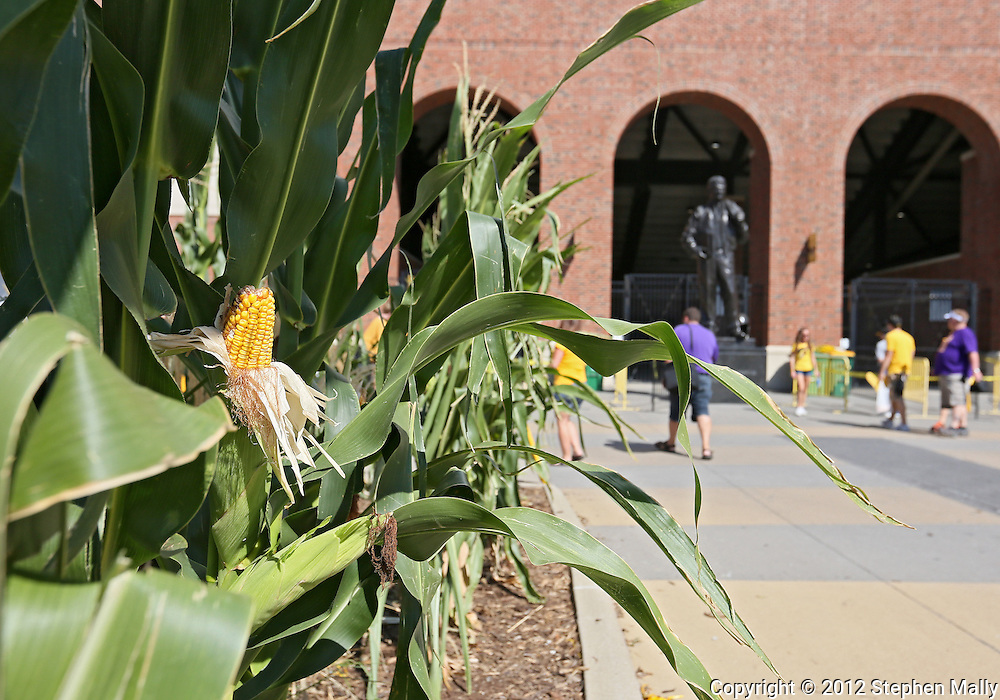 September 15 2012: Corn outside Kinnick Stadium before the start of the NCAA football game between the Northern Iowa Panthers and the Iowa Hawkeyes at Kinnick Stadium in Iowa City, Iowa on Saturday September 15, 2012. Iowa defeated Northern Iowa 27-16.