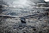 La devastazione dei roghi nella riserva naturale di Capo Gallo in Sicilia