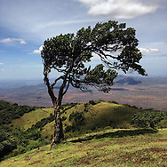 A windswept tree bent by the unrelenting breeze on the top of the Ngong Hills outside of Nairobi, Kenya. In the background is the Great Rift Valley.