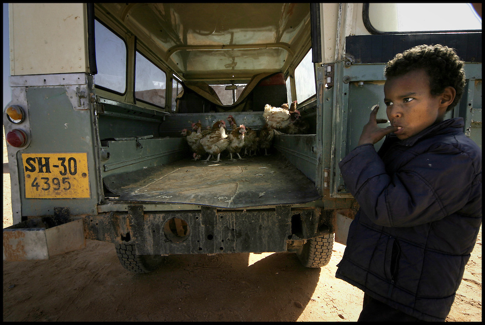 A child keep an eye on his father hens at February 27 village, Friday Dec. 30, 2005.