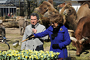 Hare Koninklijke Hoogheid Prinses Margriet heeft in Amsterdam 'Artis in Bloei' ter gelegenheid van het 175-jarig bestaan van Artis gepend.  <br /> <br /> Her Royal Highness Princess Margriet opend in Amsterdam Artis in Bloom 'on the occasion of the 175th anniversary of Artis Zoo Amsterdam.<br /> <br /> Op de foto / On the photo:  Prinses Margriet doopt een speciale jubileumtulp met de naam Tulipa Natura Artis Magistra. ///// Princess Margriet baptizes a special anniversary tulip Tulipa called Natura Artis Magistra.