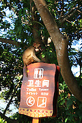 SANYA, CHINA - AUGUST 11: (CHINA OUT) <br /> <br /> Mass Propagation Of Wild Monkeys Brings More Animal Attacks <br /> <br /> A monkey searches for food on a toilet signboard at Luhuitou Park on August 11, 2014 in Sanya, Hainan province of China. Dozens of wild monkeys multiplied to over 700 at Luhuitou Park and attacked tourists especially those who carried food once in a while.<br /> ©Exclusivepix