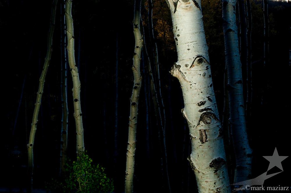 light painting in aspen forest at dusk above Park City, Utah