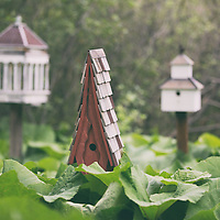 Staley Bird Houses