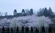 Campus Spring