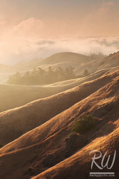 Bolinas Ridge at Sunset, Mount Tamalpais State Park, California