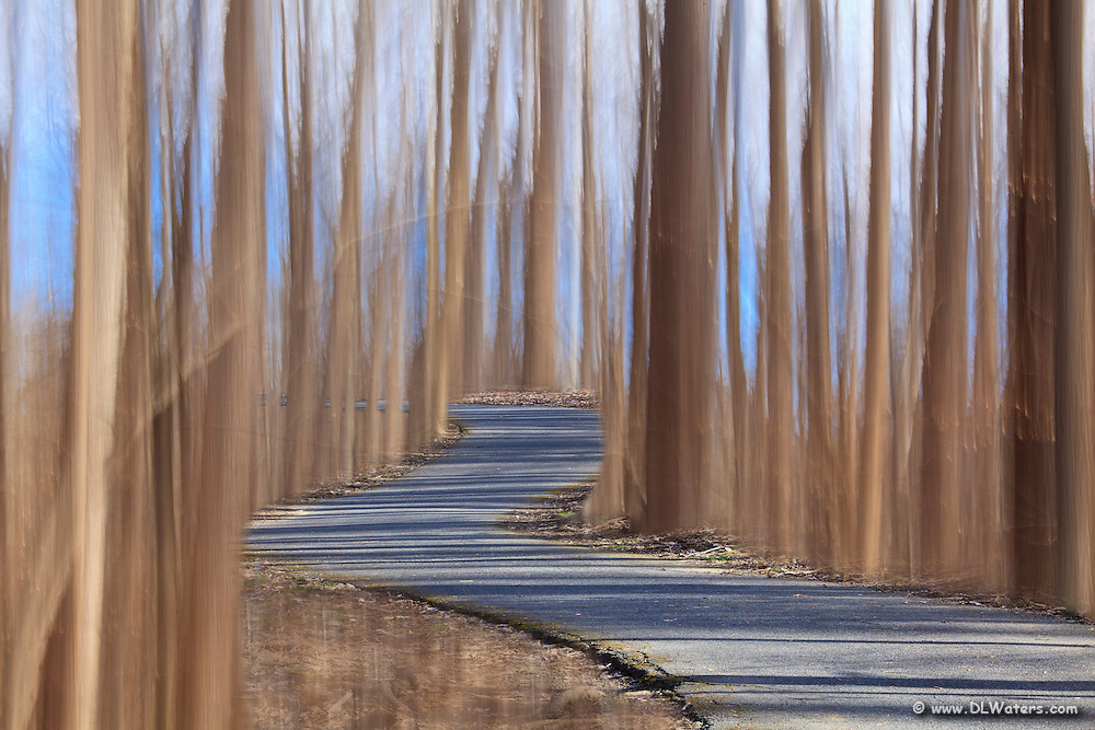 I created this surreal scene by combining two different exposures. In one exposure I moved the camera up and down with a slow shutter speed to create the blurred trees. Then I took a  photo of the path while the camera was on a tripod. I then combine the two exposures into one In Photoshop using layers.