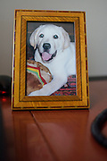 "Washington, D.C. - January 23, 2015: Chris Wallace, is the Anchor of Fox News Sunday.  A photo of Chris Wallace's late yellow lab Winston as a puppy sits next to his phone on his desk.<br /> <br /> ""I have three photos of my dog Winston, a yellow lab, in my office. He was a puppy in this photo and he had a stuffed toy, a hamburger, in his mouth. Winston died in 2012 and I really miss him.""<br /> <br /> The objects in Wallace's office in the Fox News D.C. Bureau is a mix of personal, political and celebrity history. <br /> <br /> CREDIT: Matt Roth for The New York Times<br /> Assignment ID: 30169659A"
