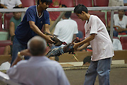 Sabong (cockfighting) is a pastime enjoyed by many Filipinos and can be found in every region. This arena is in San Fernando, Philippines. Fighting starts at 2 pm and lasts late into the evening with money exchanging hands between many gamblers. ..Photo by Jason Doiy.6-10-08