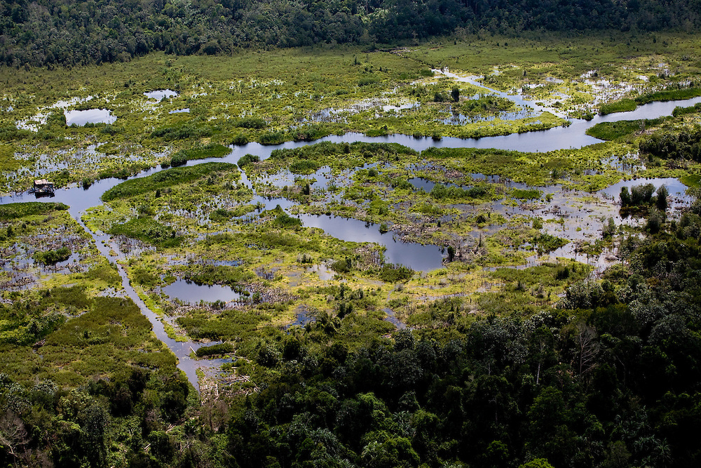 Aerial view of Peat Land Forests in the Kampar region of Sumatra, Indonesia, Aug. 30, 2008..Daniel Beltra/Greenpeace