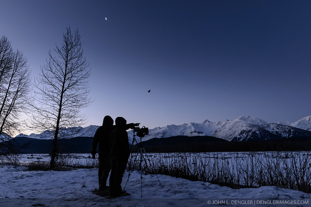Under the setting moon, rising sun and a bald eagle flying above, Steve Lewis, Raptor Management Coordinator, U.S. Fish & Wildlife Service (left) and Rachel Wheat, a graduate student at the University of California Santa Cruz wait for bald eagles to land on the traps they set on the gravel bar of the Chilkat River. Each morning under the cover of darkness they would set their traps. The traps are being used to capture bald eagles that will be used in a study being conducted by Wheat. Once the traps are set, it is a matter of waiting -- and waiting. On some days no eagles were caught, on others, only one or two were caught. Wheat is conducting a bald eagle migration study of eagles that visit the Chilkat River for her doctoral dissertation. She hopes to learn how closely eagles track salmon availability across time and space. The bald eagles are being tracked using solar-powered GPS satellite transmitters (also known as a PTT - platform transmitter terminal) that attach to the backs of the eagles using a lightweight harness. During late fall, bald eagles congregate along the Chilkat River to feed on salmon. This gathering of bald eagles in the Alaska Chilkat Bald Eagle Preserve is believed to be one of the largest gatherings of bald eagles in the world.