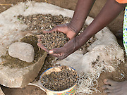 Chicken droppings being used to make plant tea