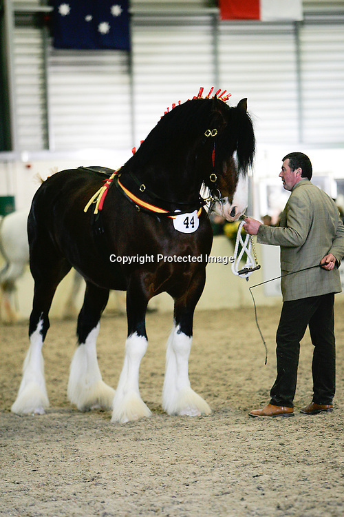 Shire Horse Society Spring Show 2012<br />