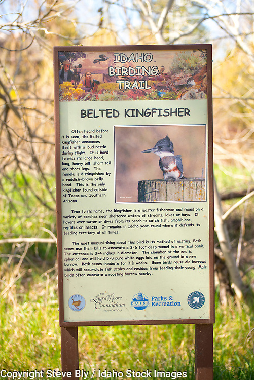 Boise River Greenbelt /Idaho Birding Trail interpretive sign for Belted Kingfisher, Boise, Idaho
