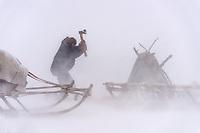 Holz hacken im Schneesturm, Polarural, Russland
