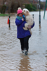 © Licensed to London News Pictures. 18/02/2020. Tewkesbury, Gloucestershire, UK. Caroline from Tewkesbury carries her cockapoo 'Chester' through flood water at Tewkesbury in Gloucestershire. Storm Dennis continues to worsen the severe flooding at Tewkesbury in Gloucestershire, with continuing heavy rainfall in the late afternoon today. Photo credit: Graham M. Lawrence/LNP