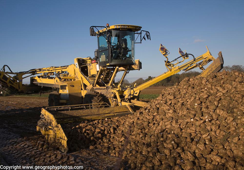 Ropa euro maus 4 sugar beet loader machine in operation, Shottisham, Suffolk, England