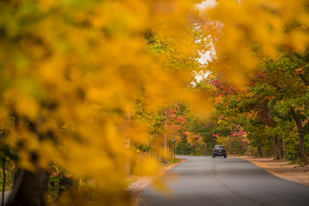 A tunnel of trees with fall foliage along Lakeshore Drive on the way to Presque Isle Park in Marquette, Michigan.