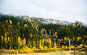Autumn colours show themselves at the base of Revelstoke Mountain Resort.