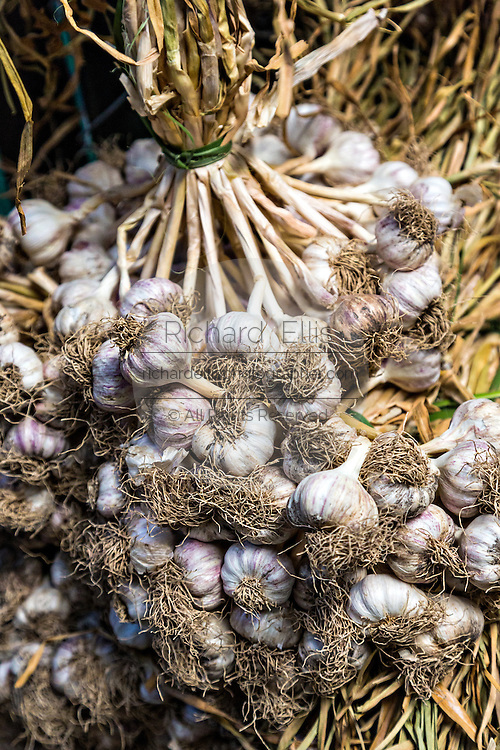 Garlic bulbs at Benito Juarez market in Oaxaca, Mexico.