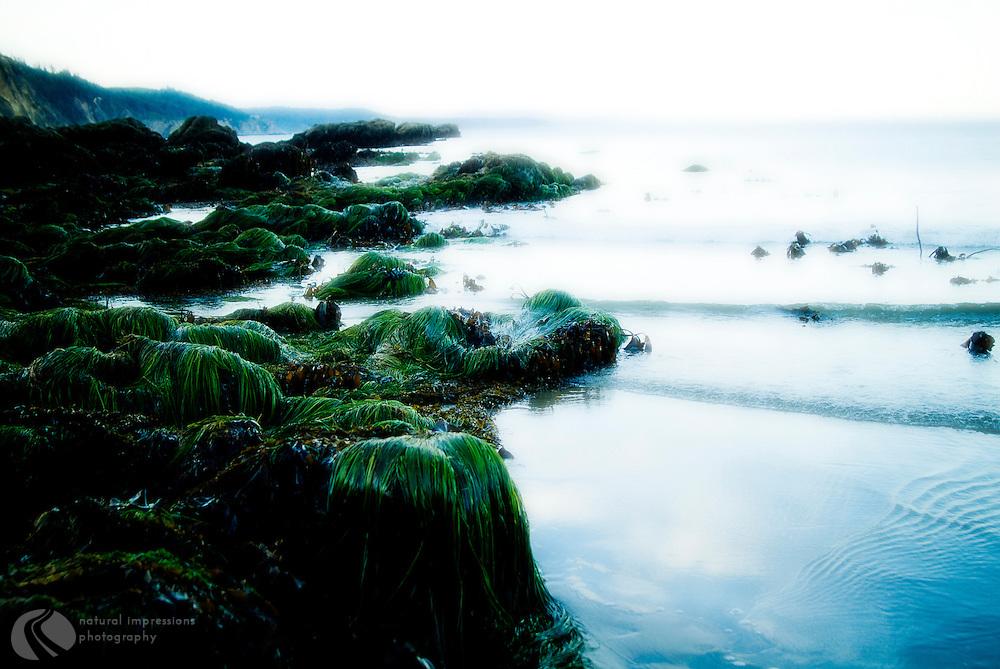 Sea Grass on the Oregon Coast.