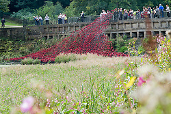 "Poppies from the Art installation ""Blood Swept Lands and Seas of Red""  at the Tower of London are displayed at the Cascade Bridge in The Yorkshire Sculpture Park<br />  10 September 2015<br />  Image © Paul David Drabble <br />  www.pauldaviddrabble.co.uk"