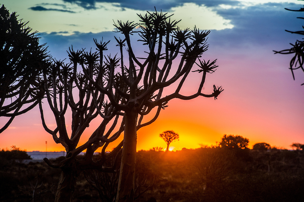 Keetmanshoop, Namibia - Quiver tree forest silhouetted at dusk in the Playground of the Giants