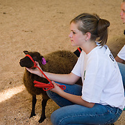 4-H Livestock Show at the Columbia County Fair in Chatham, NY