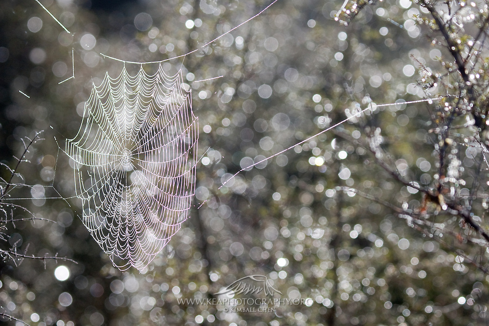 Spiderweb with dew in background, Lake Matheson, New Zealand