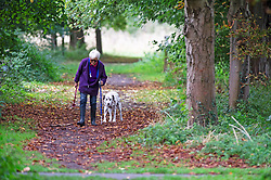 ©Licensed to London News Pictures 04/10/2019.<br /> Sidcup,UK. Elderly lady walking with her Dalmatian. Autumnal weather this morning for dog walkers at Footscray Meadows, Sidcup, South East London. Photo credit: Grant Falvey/LNP