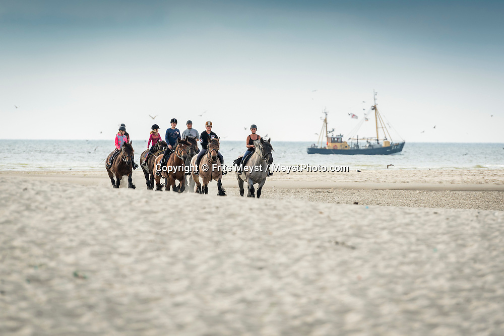 Texel, Noord Holland, Waddenzee, Netherlands, August 2015.  With Jan Plezier horse drawn cart to de Slufter  nature reserve. The Wadden Sea is an intertidal zone in the southeastern part of the North Sea. It lies between the coast of northwestern continental Europe and the range of Frisian Islands, forming a shallow body of water with tidal flats and wetlands. It is rich in biological diversity. In 2009, the  Waddenzee was added to the UNESCO World Heritage List. Photo by Frits Meyst / Meystphoto.com