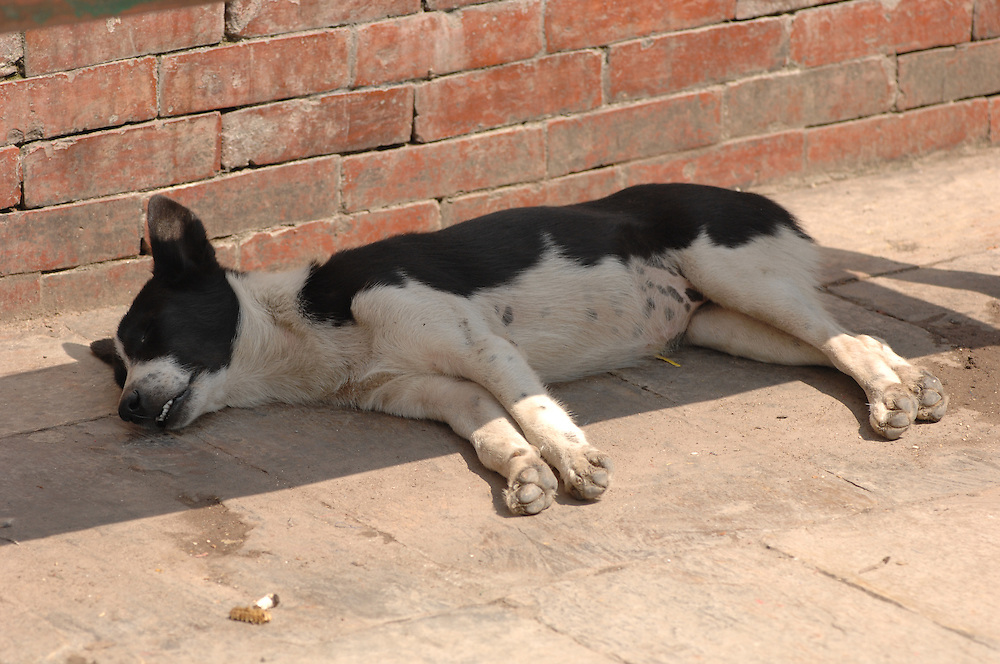A stray dog sleeps in the shade of a bench at Swayambhunath - the Monkey Temple - in Nepal.