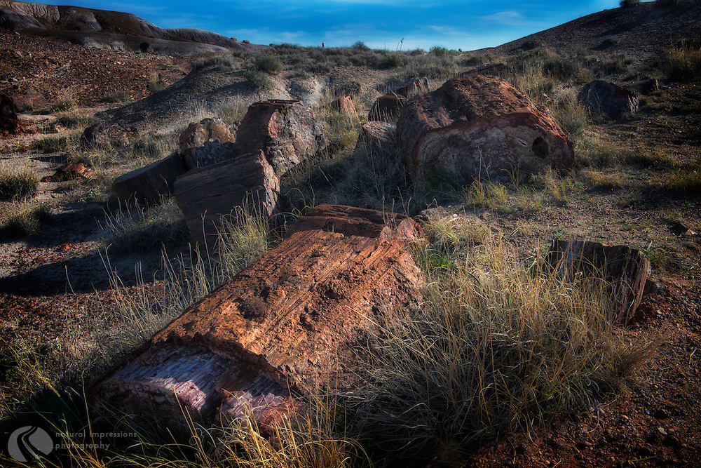Petrified FOrest National Park, Petrified Forest NP, landscape