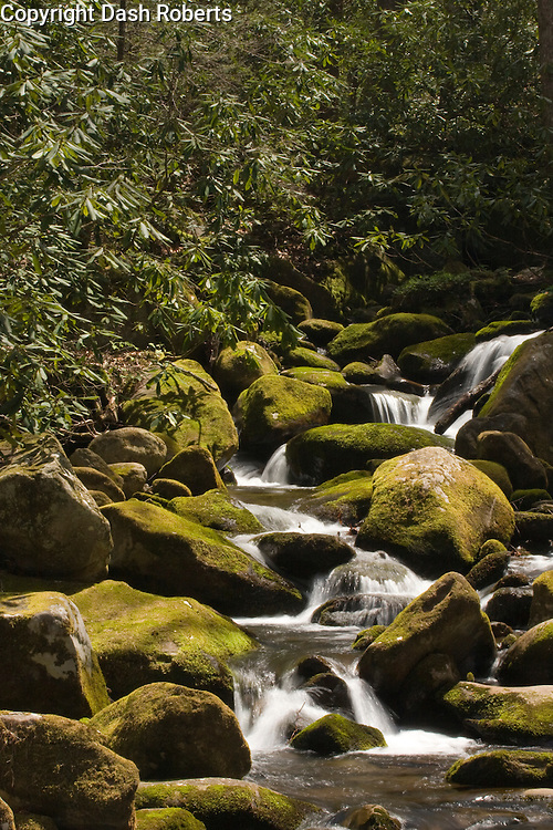 A mountain stream cascades over moss cover boulders just off the Roaring Fork Motor Trail in the Smoky Mountains near Gatlinburg, Tennessee.