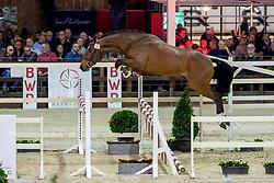 038, Randix van de Hunters<br /> BWP Hengstenkeuring -  Lier 2020<br /> © Hippo Foto - Dirk Caremans<br />  17/01/2020