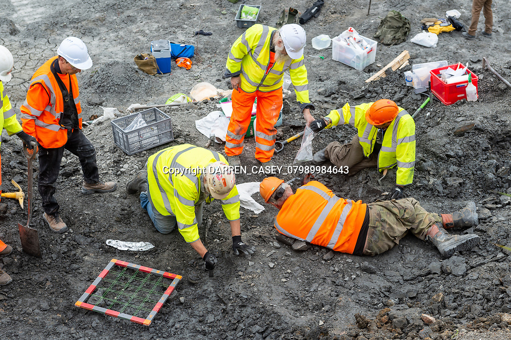 Shown is Archeological dig at Middlegate Lane Quarry in North Lincs for Cemex. The archeological team have discovered vertebrae and rib bones from a Plesiosaurus. Not for release!! images  © Darren Casey/DCimaging 07989984643 info@dcimaging.co.uk No syndication without prior arrangement