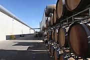 Israel, Barkan Winery. Wooden Aging barrels in the storeroom