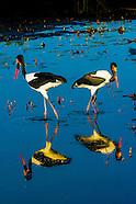 Botswana-Wildlife-Birds