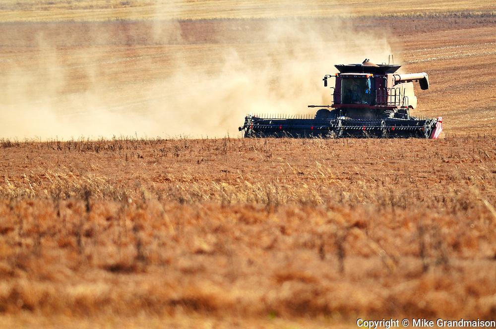 Combining lentils<br /> near Abermathy<br /> Saskatchewan<br /> Canada