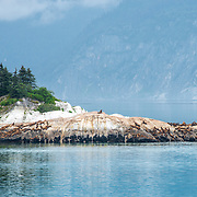 Sea Lions on rocks. Glacier Bay, Alaska.