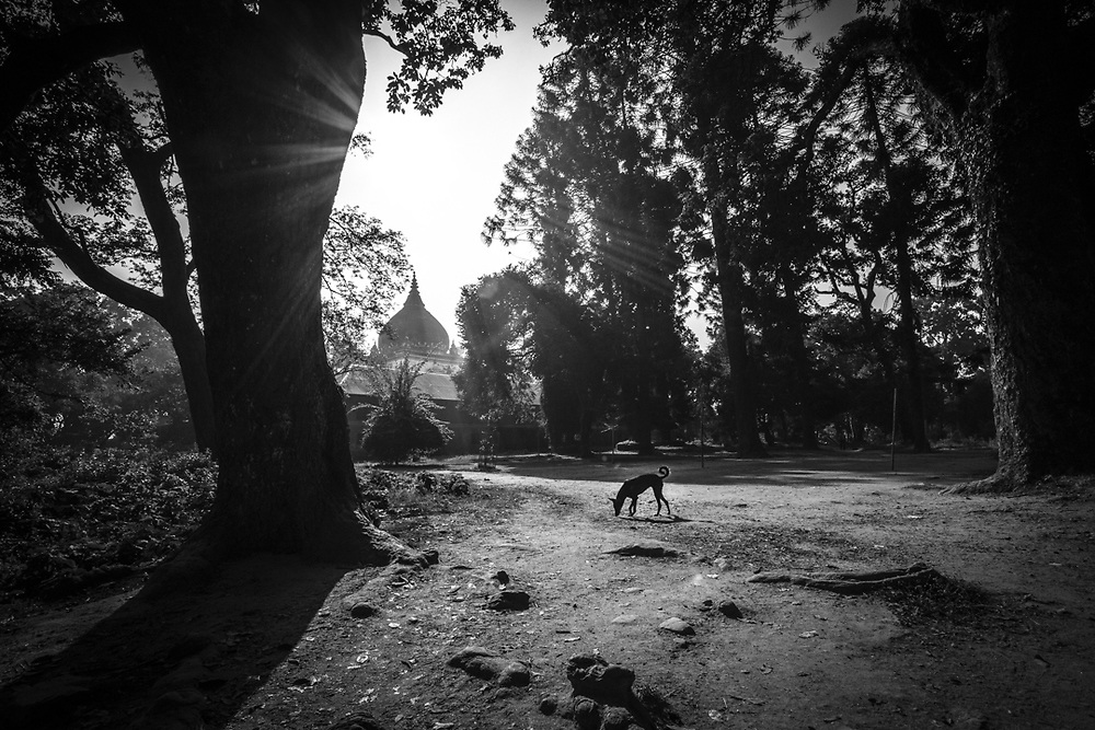 Morning scene in the forest around Pashupatinath temple of Kathmandu, Nepal.<br />