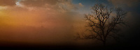 a bare tree greets the light of a new day at Cade's Cove, Great Smoky Mountains National Park, Tennessee, USA pan banner